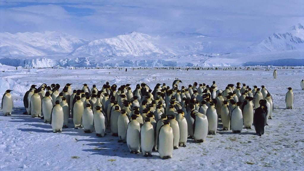 Antarctica-3