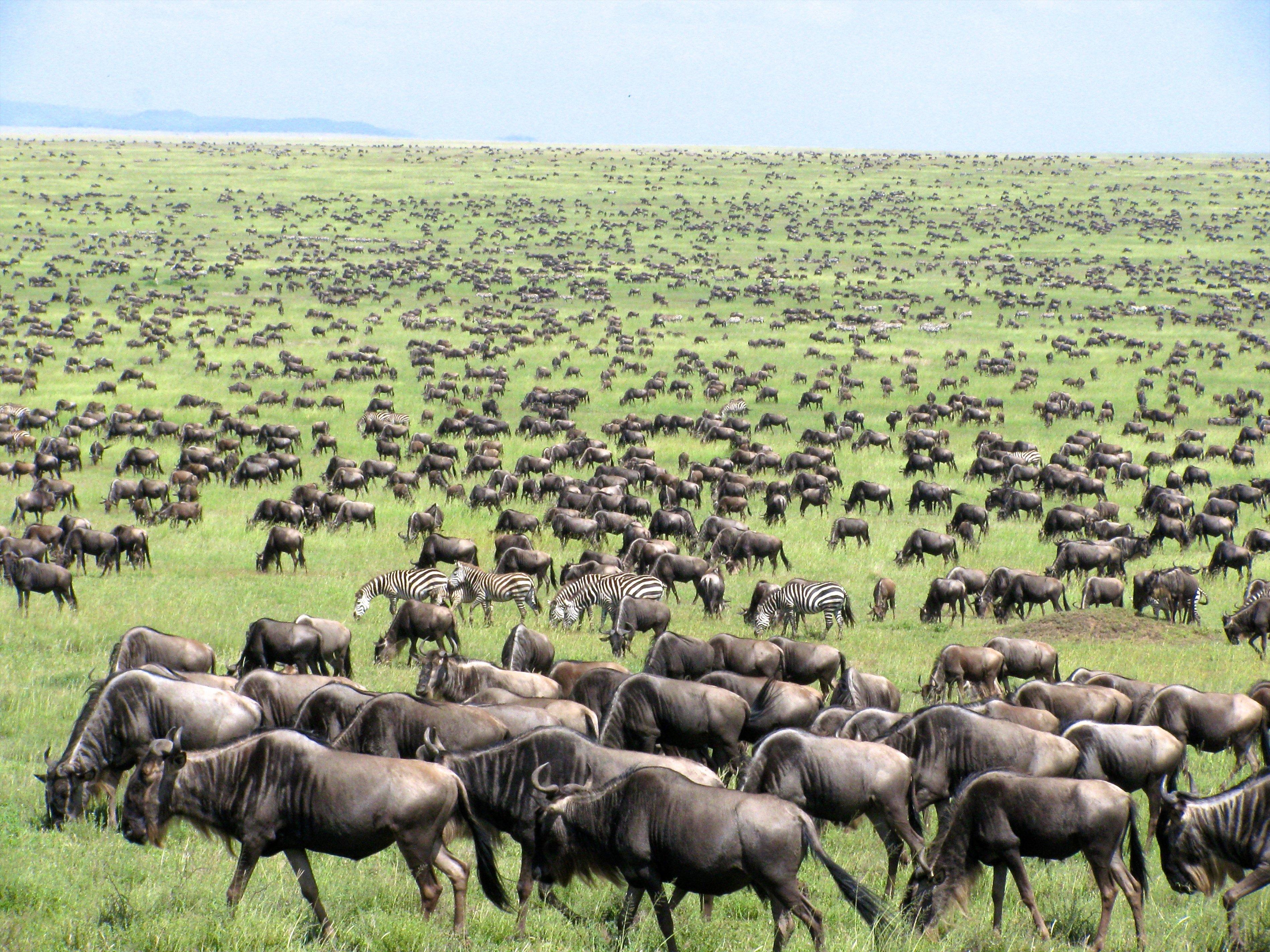 Great Migration of Tanzania