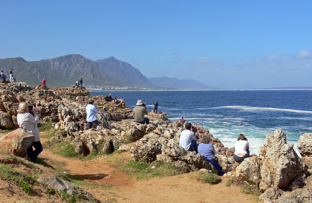 Hermanus whale watchers, South Africa