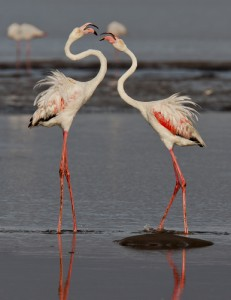 Bolivia Flamingoes 179480780