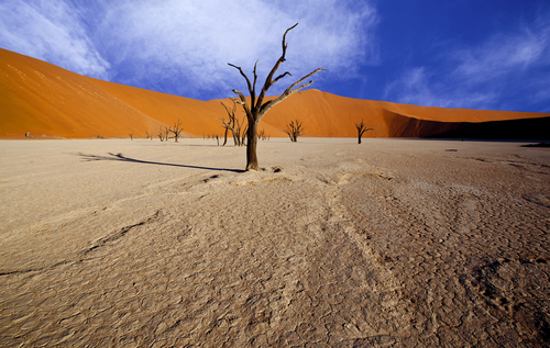 The Deadvlei, Namibia. Here a forest once stood, before the sand dunes engulfed it, and then moved on centuries later.