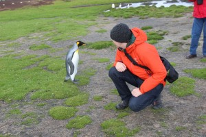 Penguin's are very curious