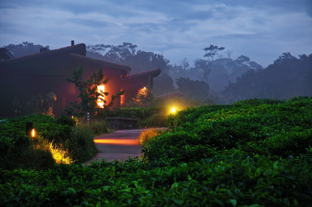 After Sunset at Nyungwe