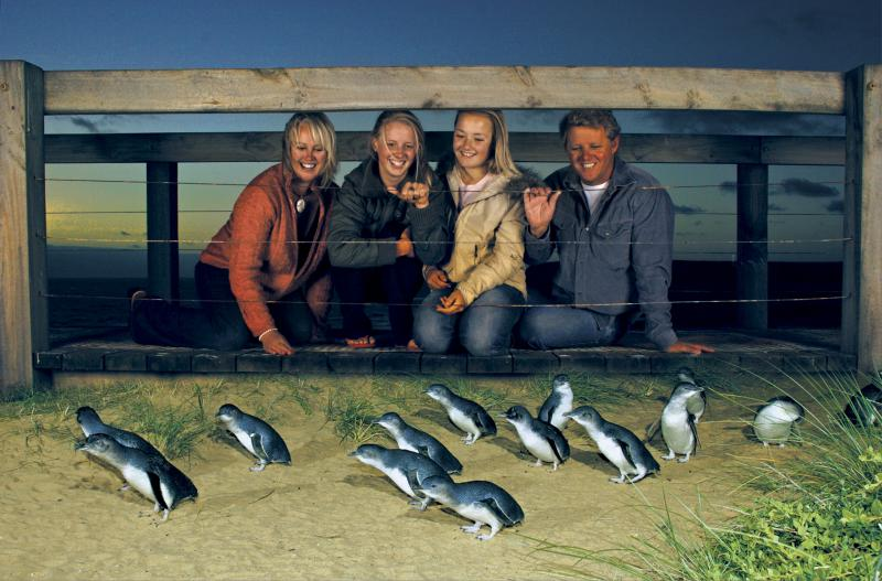 Penguin Parade at Phillip Island, Victoria, Australia