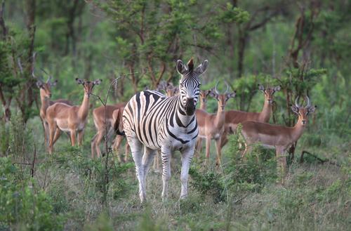 Hluhluwe-Umfolozi Wildlife Reserve