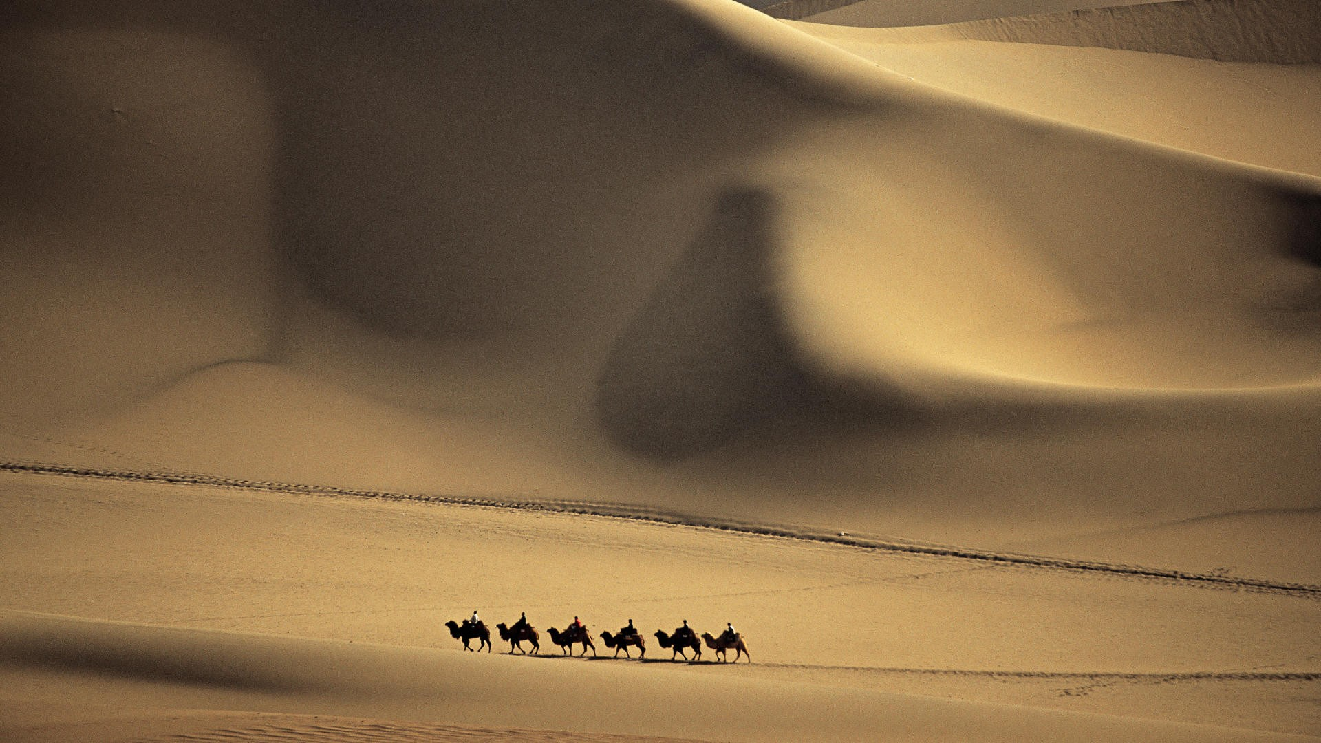 Camel caravan passes through the Sands of the Taklimakan Desert