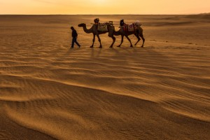China Dunhuang Camels Sunset Gansu Silk Road_185192039