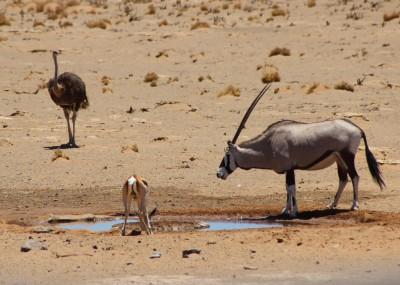 Namibian Onyx