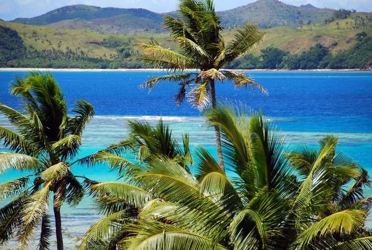 Fijian Palm Trees, Fiji