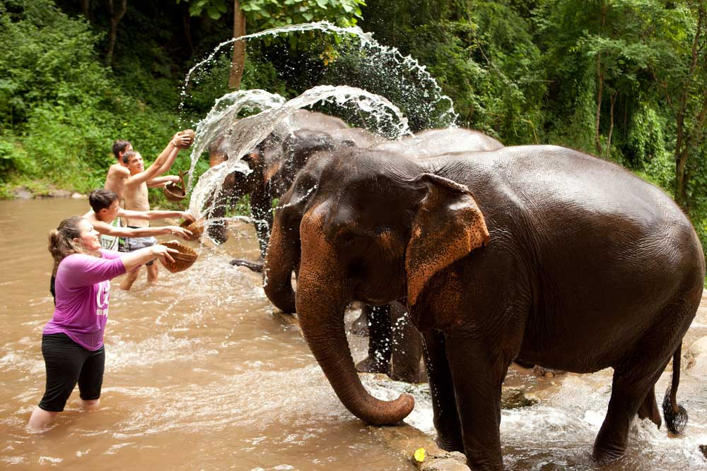 Playing with the elephants in Chiang Mai Thailand