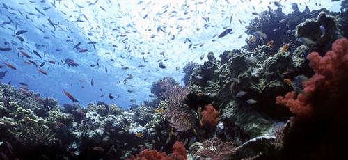 Beqa Lagoon, Fiji