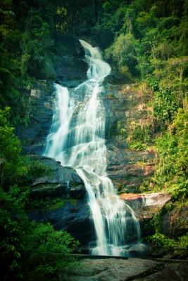 Rio Brazil Tijuca forest LATIN_130104062