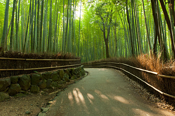 Bamboo Grove at Arashiyama, Kyoto Japan