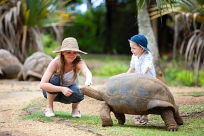 Children feeding a giant turtle