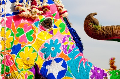 Painted Elephant, Jaipur