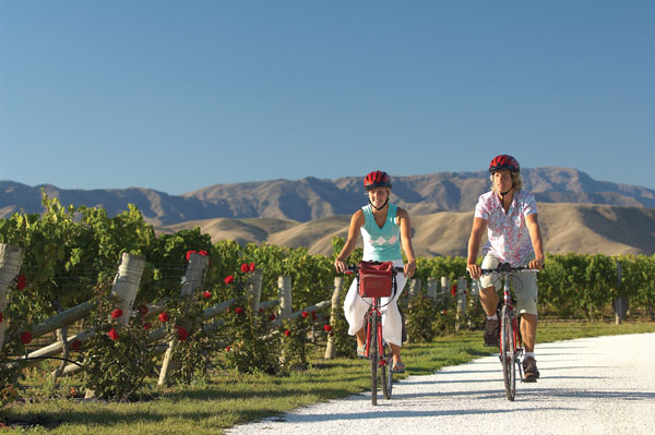 Bicycling through a vineyard in New Zealand