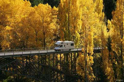 New Zealand Motorhome Fall Leaves