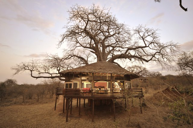 Treehouse at Tarangire Treetops, Tanzania