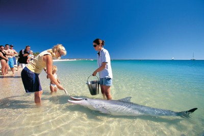 Bottlenose Dolphin. (Image courtesy of Tourism Western Australia)