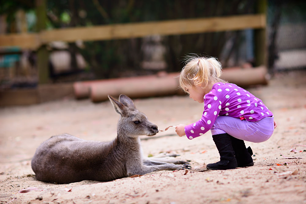Cute Young Girl Feeding Kangaroo, Australia Zoo_170370611
