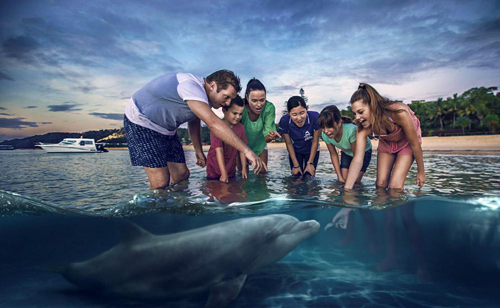 Feeding Wild Dolphins at Tangalooma, Australia