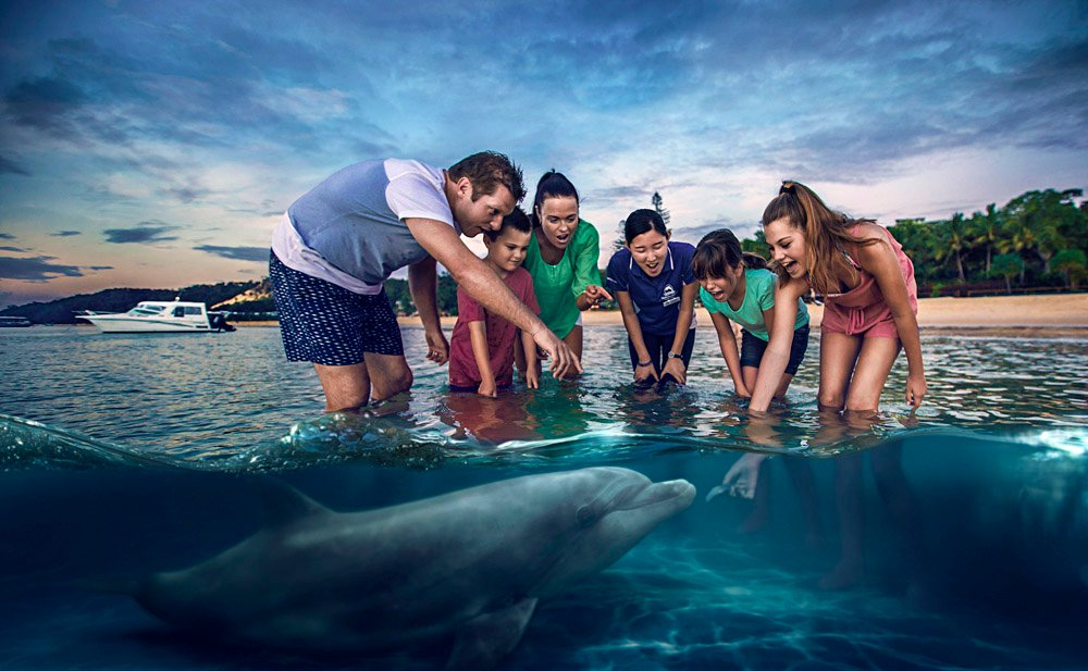 Feeding wild dolphins at Tangalooma