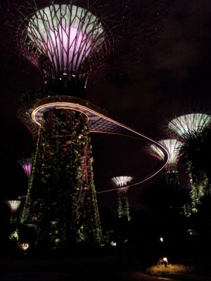 Night Shot of Gardens By the Bay, Singapore
