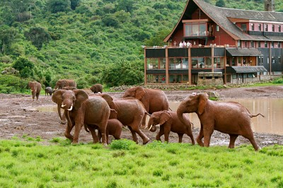 Elephants around The Ark