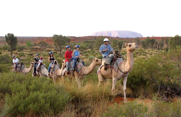 Camel trek in Uluru