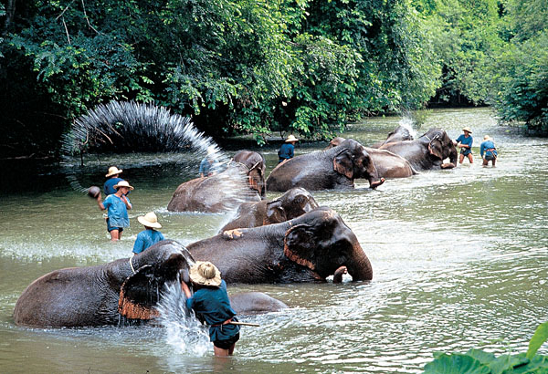 Elephant orphanage in Chiang Mai