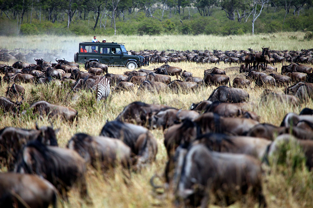 Jeep migration safari in the Masai, Kenya