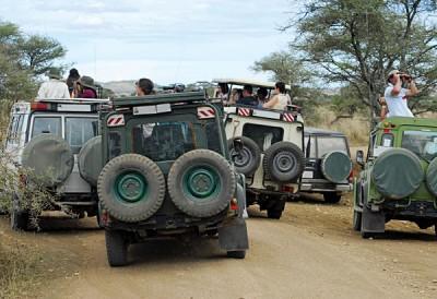 Serengeti Traffic Jam, Tanzania