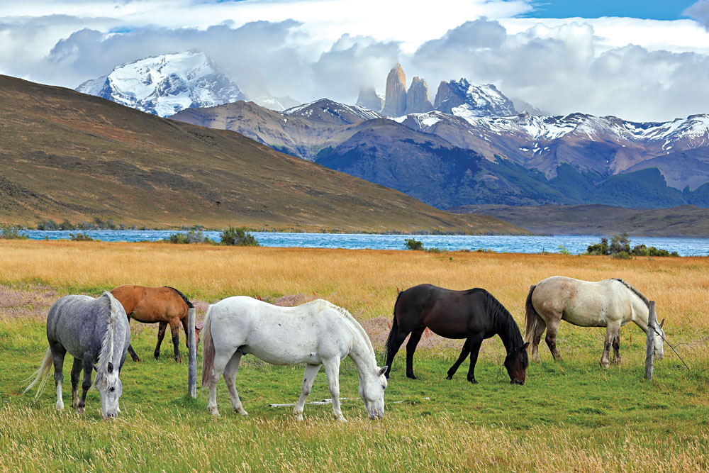 Horses grazing in Torres del Paine, Patagonia Chile