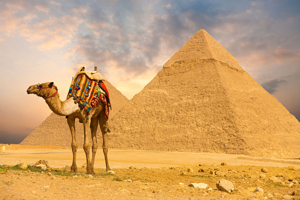 Colourfully Saddled Camel Waits for its Owner in Front of the Pyramids with a Beautiful Sky of Giza in Cairo, Egypt