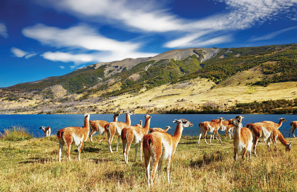 Andean Crossing Deer, Argentina