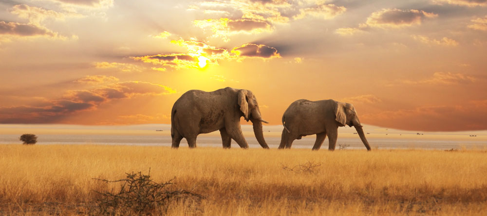 Elephants in the Horizon, Africa Cropped