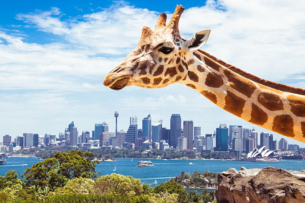 So Much To See In Sydney S Taronga Zoo Goway