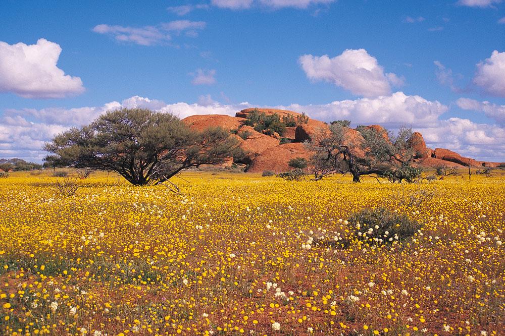 Western Australia Wildflowers, Australia
