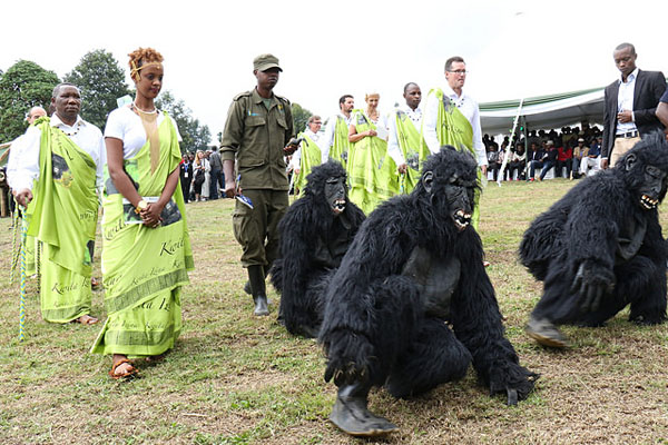 Men dressed as gorillas is part of the celebration