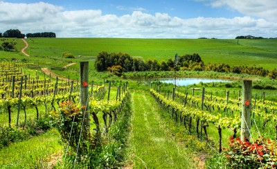 McLaren Vale Vineyard, South Australia