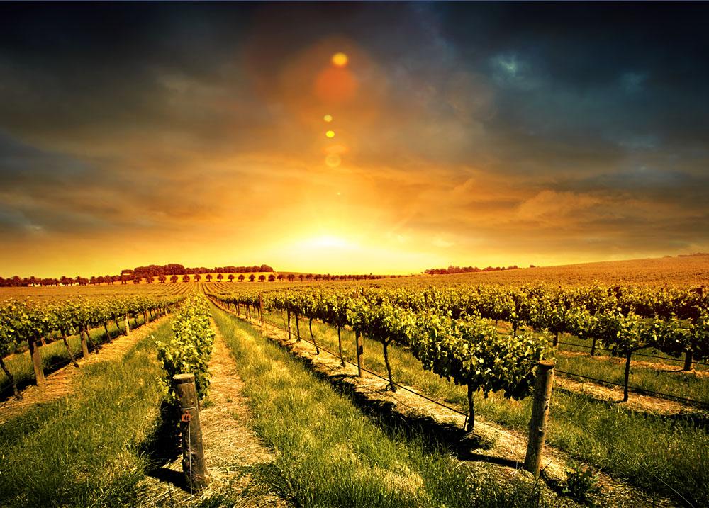 Barossa Valley Sunset, Australia