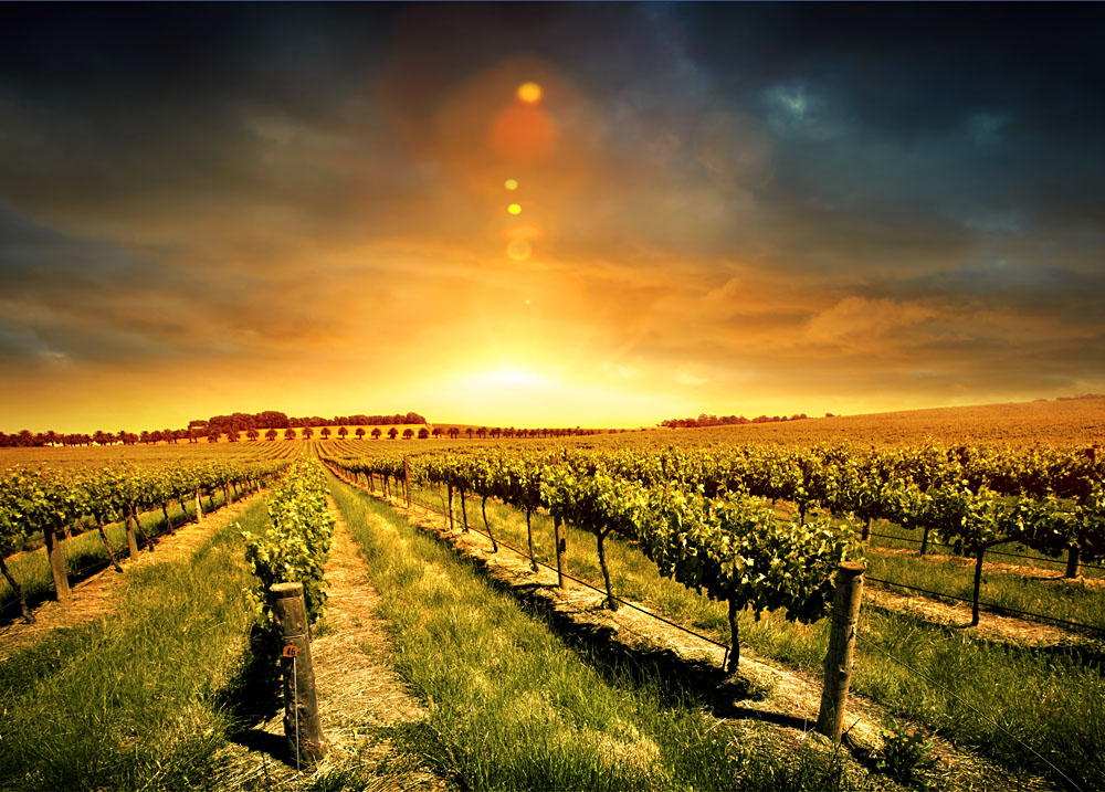 Barossa Valley Sunset, Australia
