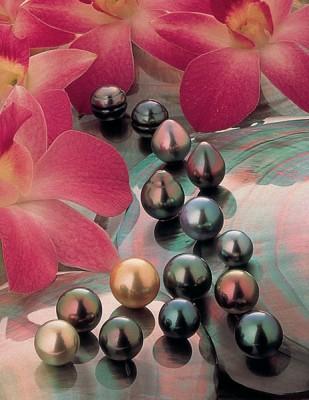 Flower and Pearls, Tahiti