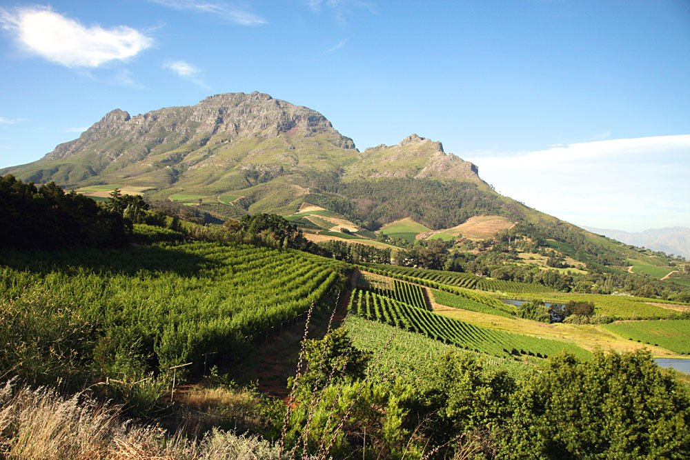 Franschhoek Vineyard, South Africa