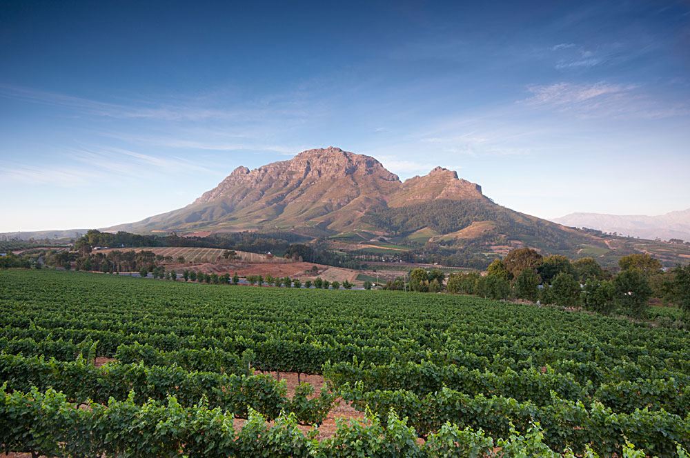 Franschhoek Wine Region, South Africa