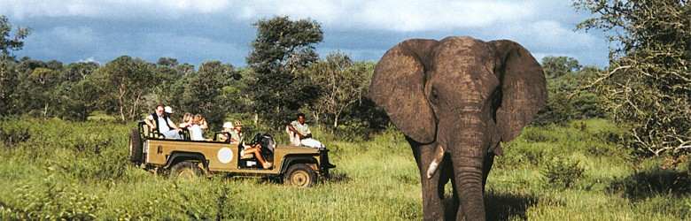 Game View of Elephant, Sabi Sands, South Africa