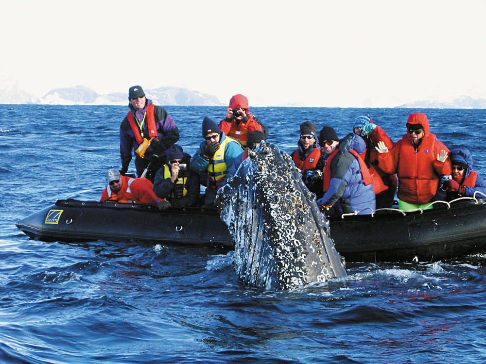 Close encounter with a humpback whale