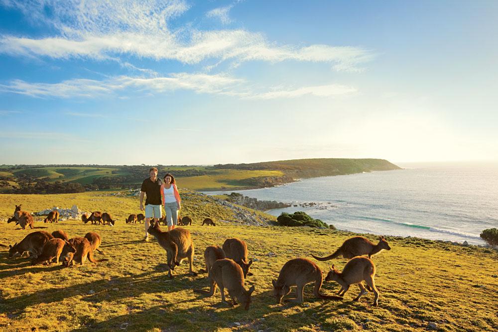 Kangaroos on Kangaroo Island, Australia