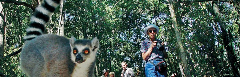 Lemur and Tourists, Madagascar
