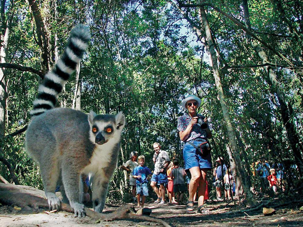 Lemur and Tourists, Madagascar